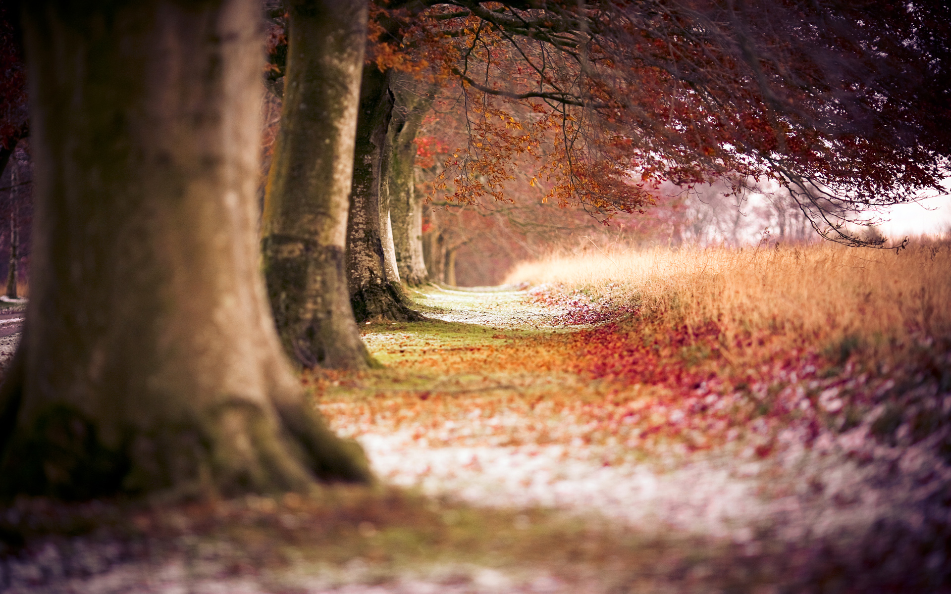 Beautiful Nature Background Images Hd ...