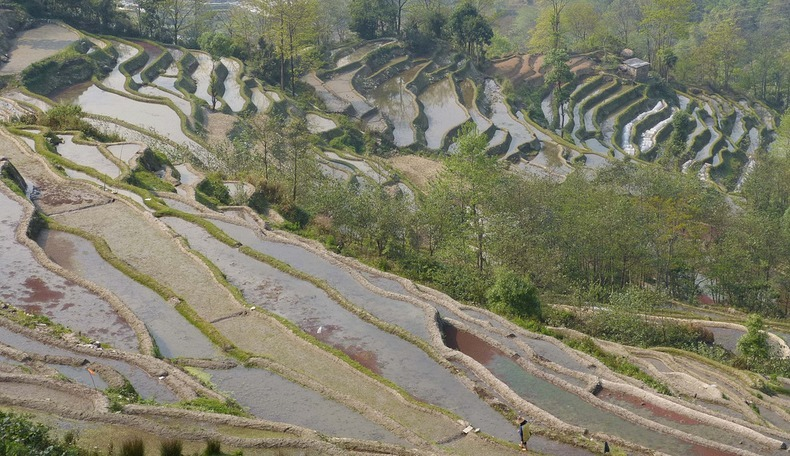 yunnan-rice-terraces-7