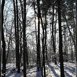 winterlicher Grunewald