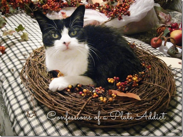 CONFESSIONS OF A PLATE ADDICT Kitty Decorates for Fall