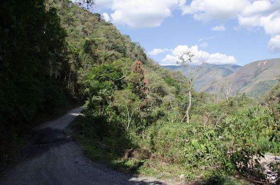 La piste vers Suapi (alt. 1025 m), au nord de Coroico (Yungas, Bolivie), 14 octobre 2012. Photo : C. Basset