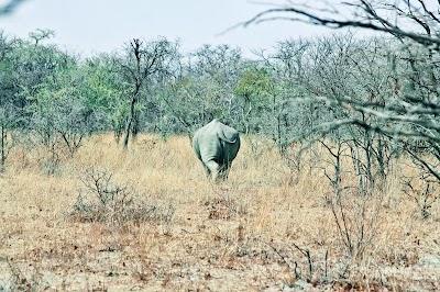 SouthernAfrica255.jpg