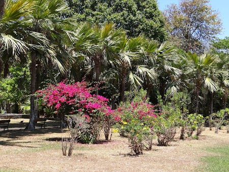 Obiective turistice Mauritius: Gradina botanica Pamplemousse
