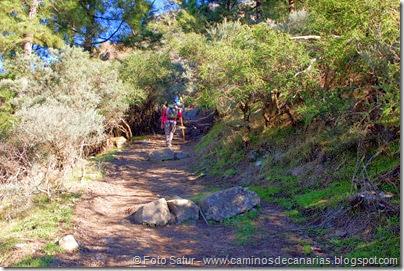 7014 Cruz Tejeda-Artenara-Guardaya(El Salviar)