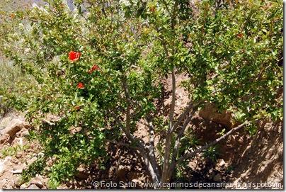 5718 Artenara-Tejeda(Granado)