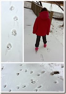 Animal Tracks from KC Edventures