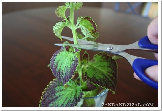 cut plant top