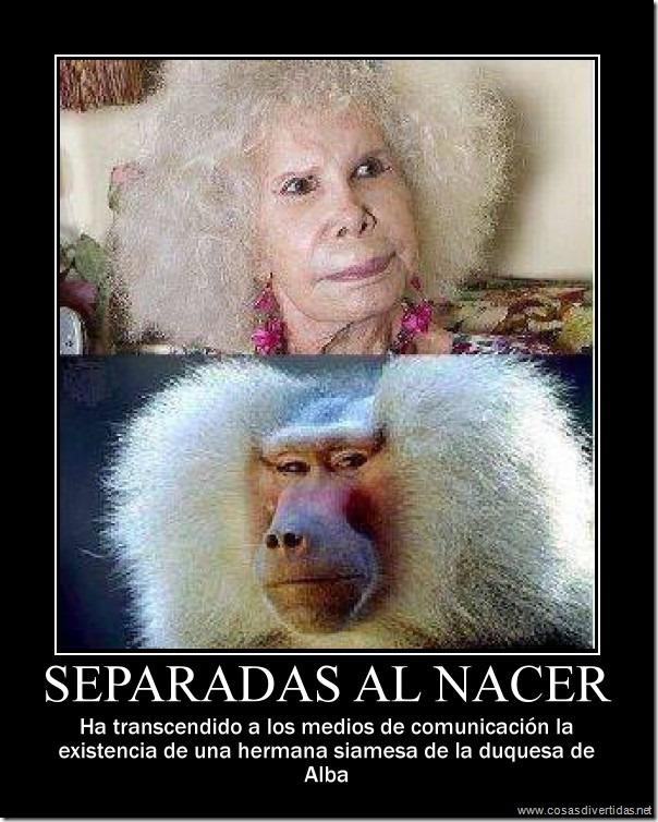 Humor duquesa de Alba