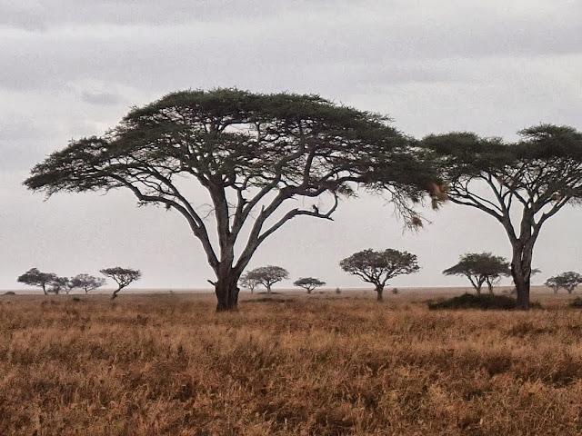Serengeti 1 070.JPG