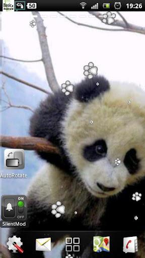 Baby Panda Live Wallpaper