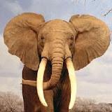 elefante2.jpg