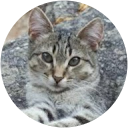 Image Google de clinique vétérinaire de la crau