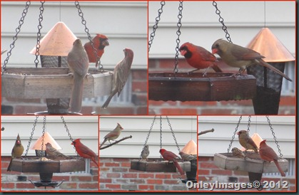 Cardinals M-F collage