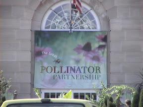 068 - El gran Pollinator.JPG