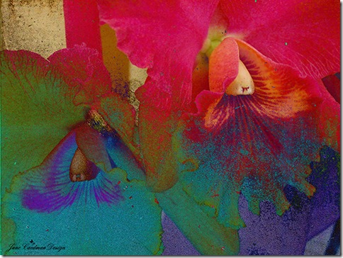 Orchids_Abstract