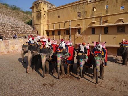 13. Elefanti aliniati.JPG