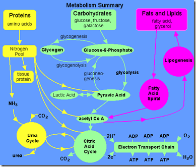 Metabolism of Lipids Guide and Notes