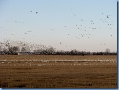 5777 Arkansas - I-40 - flock of birds
