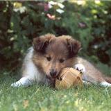 Fabi som nuttet hundevalp