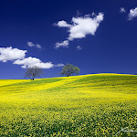 Yellow_and_Blue_by_XavierJamonet.jpg