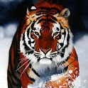 tiger game:(free) icon