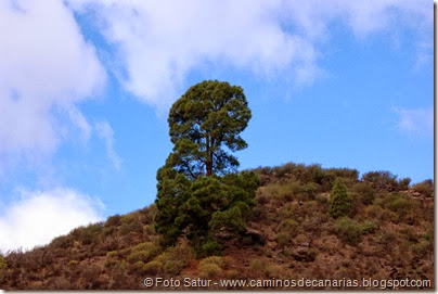 6759 Presa de las Niñas-Soria(Pino canario)