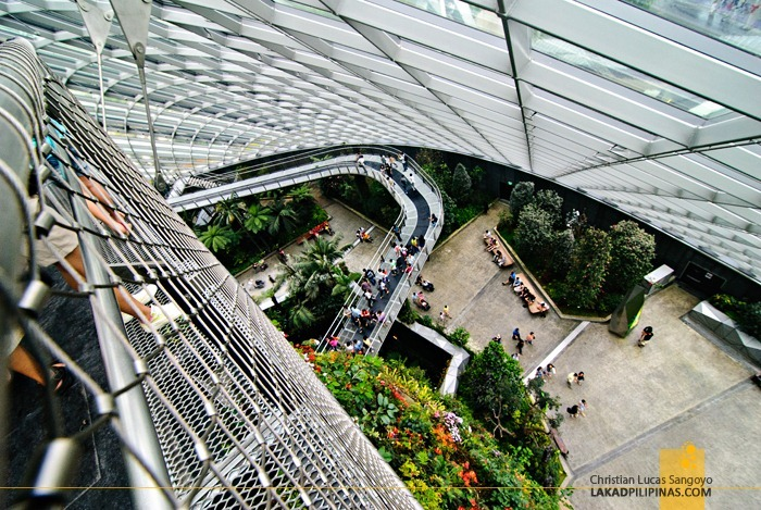 Cloud Forest Massive Drop at Gardens by the Bay