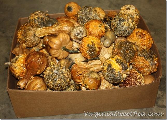 Preserved Gourd Wreath Step3