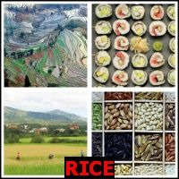 RICE- Whats The Word Answers