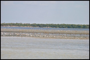 19 - wading birds take off