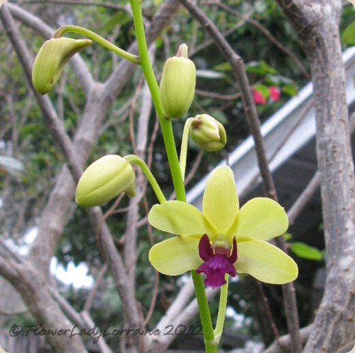 10-25-unkn-orchid