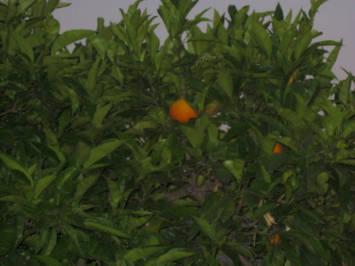 Mandarins, I had to have one.