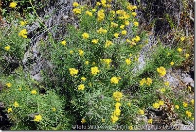 1094 Arteara-S.Fernando(Salado verde)
