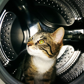 CAT in the washing machine by Morgentau ;) - Animals - Cats Portraits ( #showusyourpets, cat, pets, funny, washing, #garyfongpets, hypnotic, mammal, eyes, animal,  )