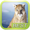 Mountain Lion Sound Effect