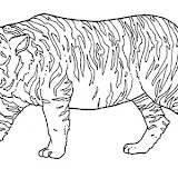 animales salvajes 8.jpg
