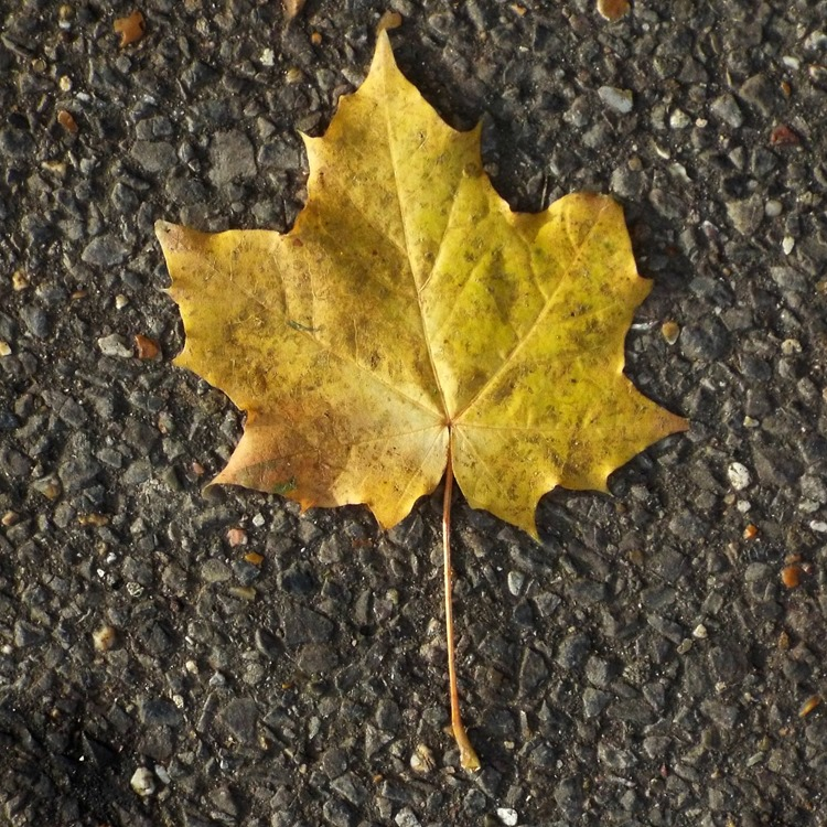 a lonely leaf