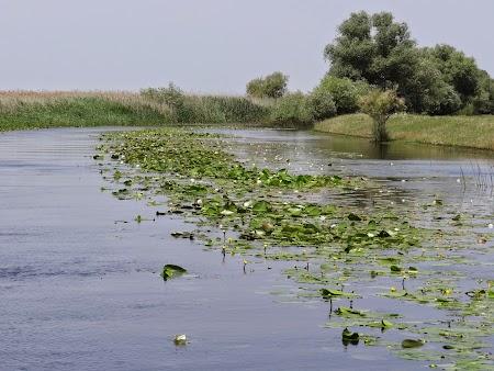 06. Nuferi in Delta Dunarii.JPG