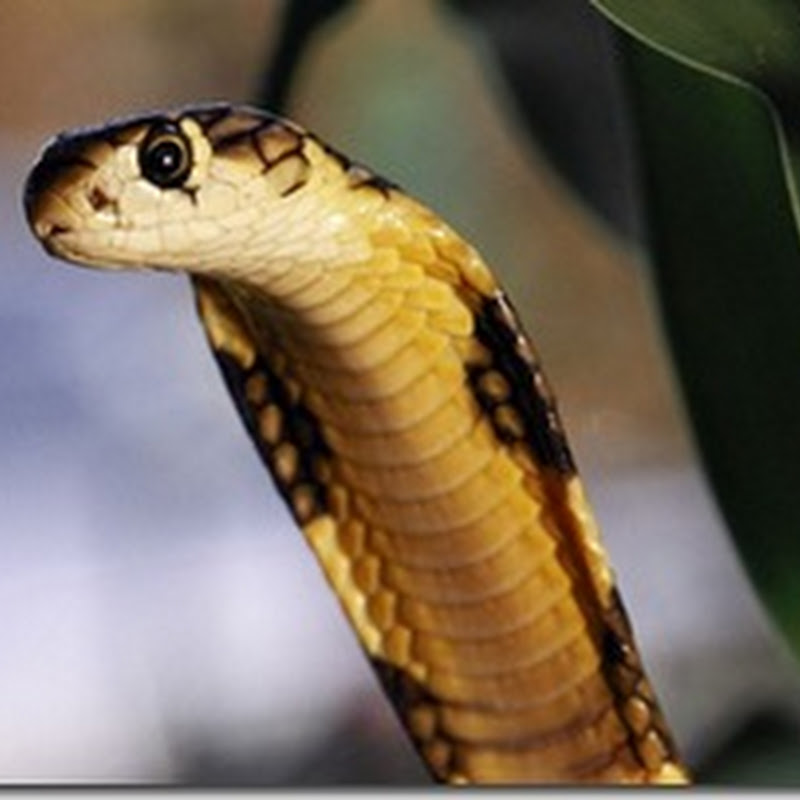 10 world's most venomous creature