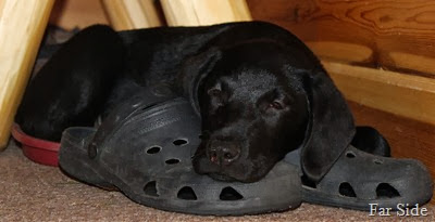 Asleep on my shoes