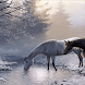 Wild Horses Live Wallpaper