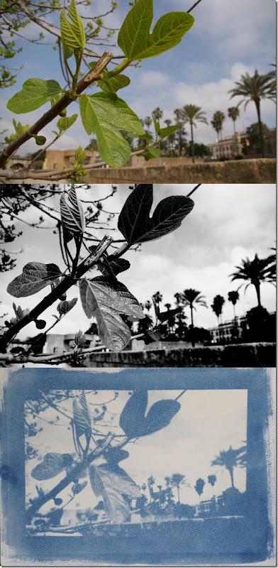 Sevilla Uferpromenade am Guadalquivir- Drei Bilder Farbe - Schwarzweiß - Cyanotypie (Blaudruck)