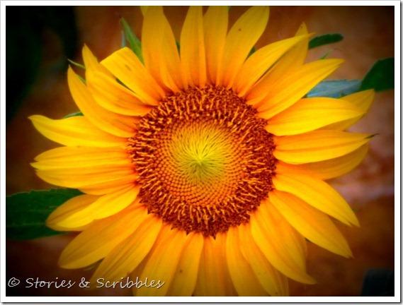 Summer flowers (3)