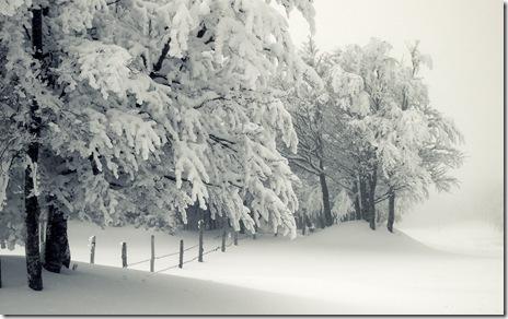 poze iarna-zapada