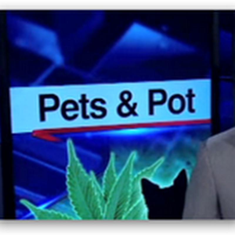 "FDA Warns ""Don't Get Your Dog Stoned"" With the Uptick of Pet Hemp Products and Clean Up Your Advertising Warning To Two Companies Selling the Products…"
