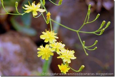 1260 Artenara-Acusa(Balillo apispillo)