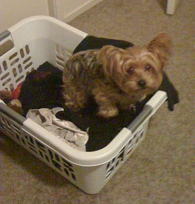 "Tasha in laundry basket... notice the stuffed ""bear"" behind her?"