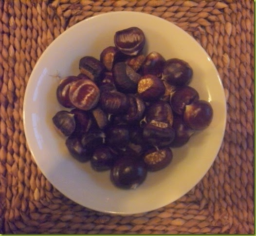 foraging sweet chestnuts