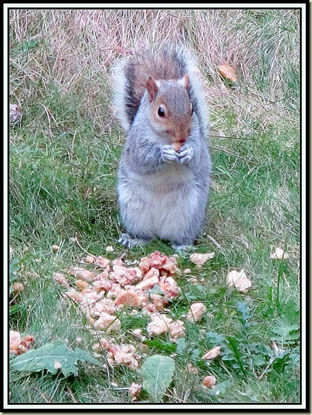 Grey squirrel at Center Parcs