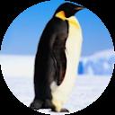 Косяк Пингвинов